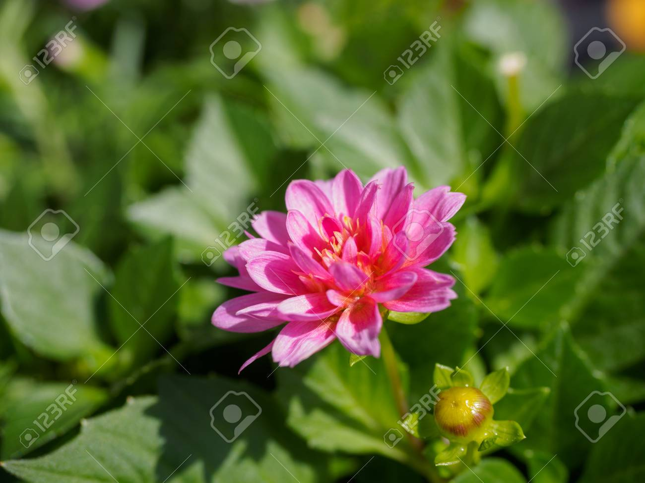 Field Of Colorful Flowers In Spring Season Stock Photo Picture And