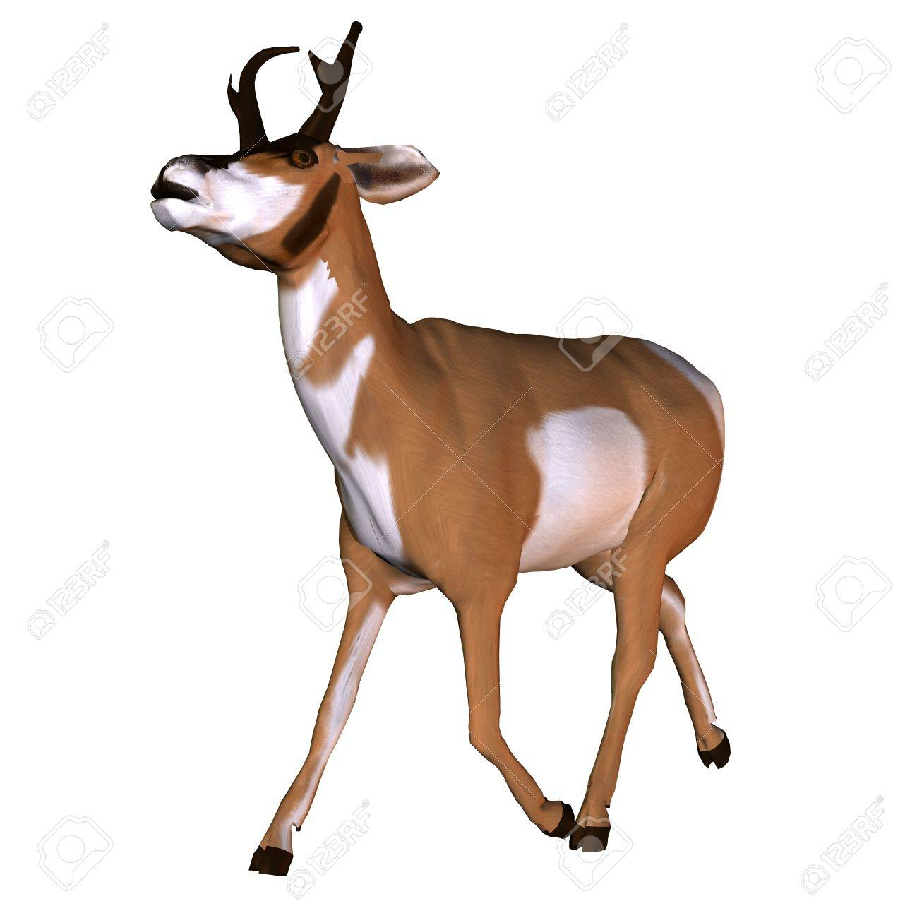 3D rendering of a North American pronghorn Stock Photo - 7877647