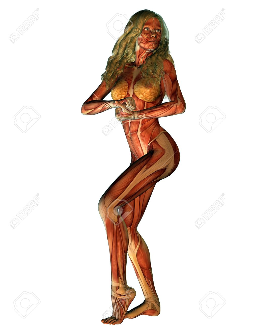 3d representation female structure of muscle in strength pose, Muscles