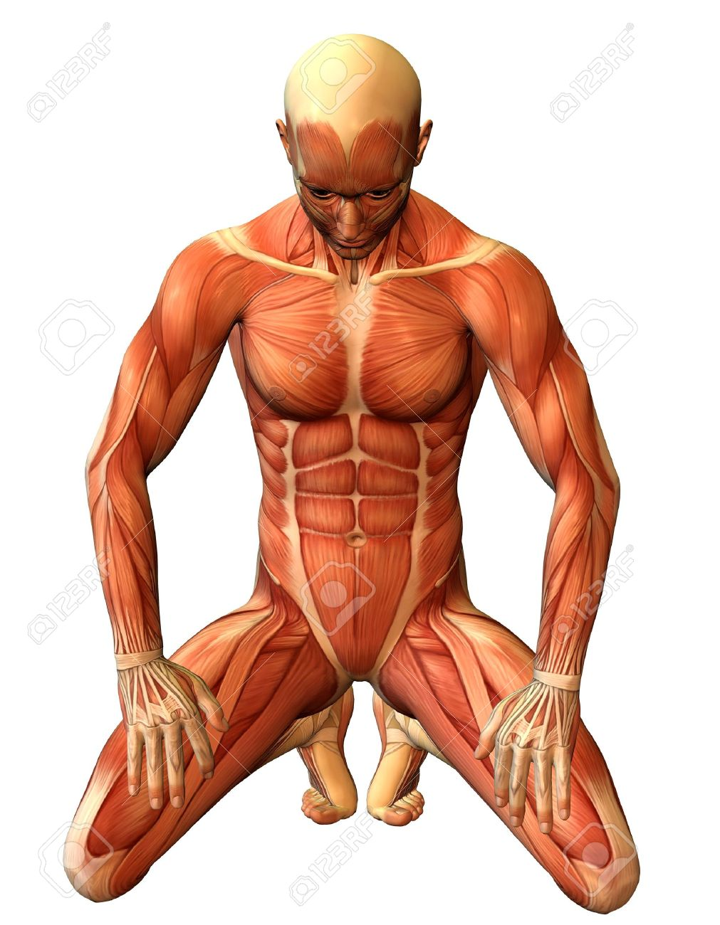 3D Rendering Study Muscle Man On His Knees Stock Photo, Picture And ...