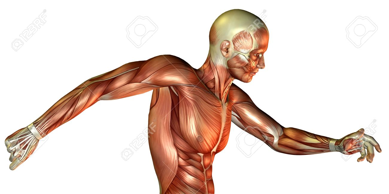 3D Render Of A Motion Study Of Male Torso Stock Photo, Picture And ...