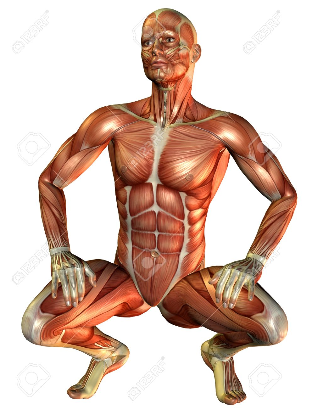 3d rendering study muscle man squatting stock photo, picture and, Muscles