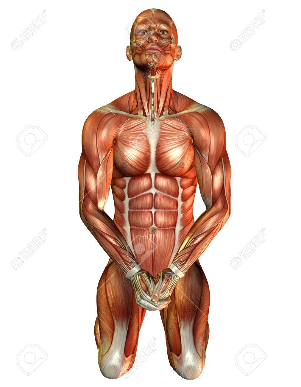 3D Rendering Of A Muscle Study Of A Man On His Knees Stock Photo ...