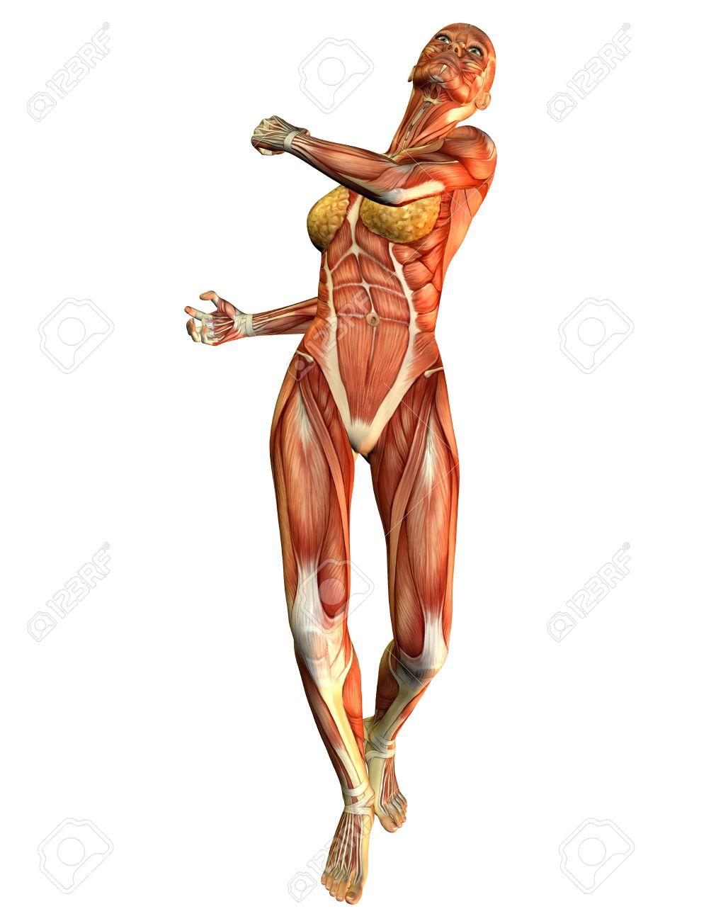 anatomiya-devushek-foto