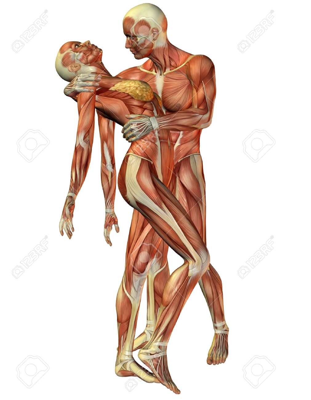 3D Rendering Muscle Woman And Man Standing Stock Photo, Picture And ...