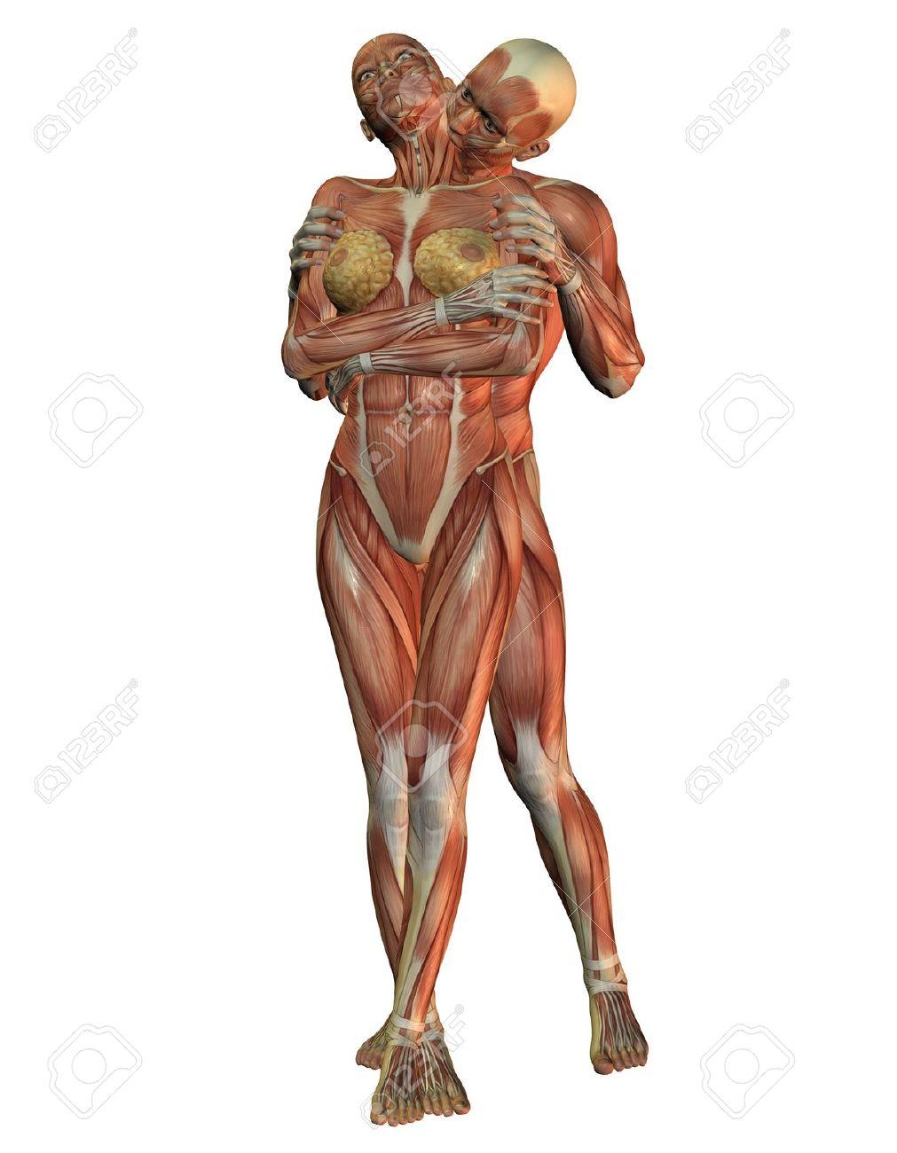 Charmant Interaktiver Anatomieatlas Galerie - Anatomie Ideen ...