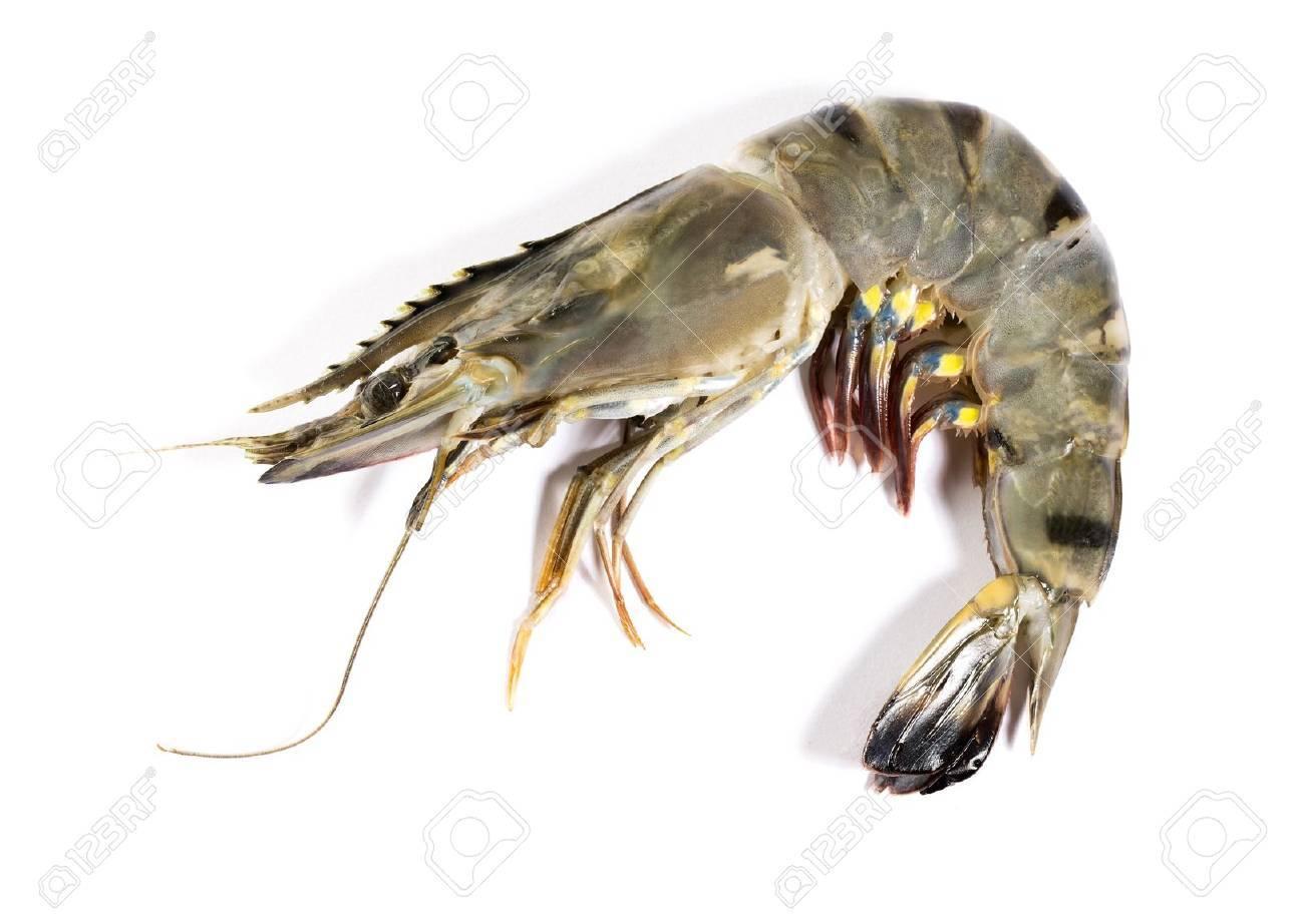 Raw black tiger shrimp on white background - 22026874