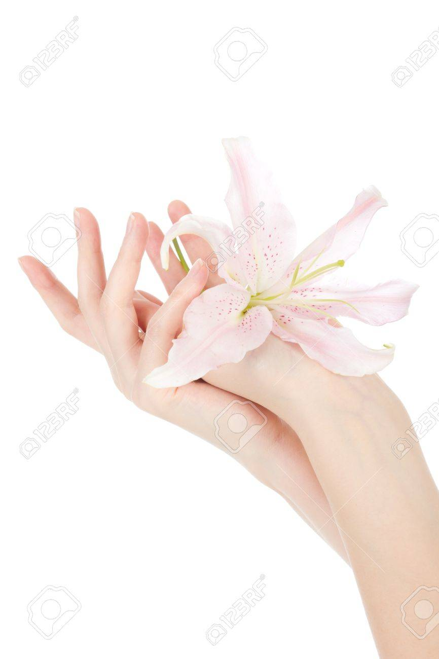 Beauty hands and lily Stock Photo - 12681024