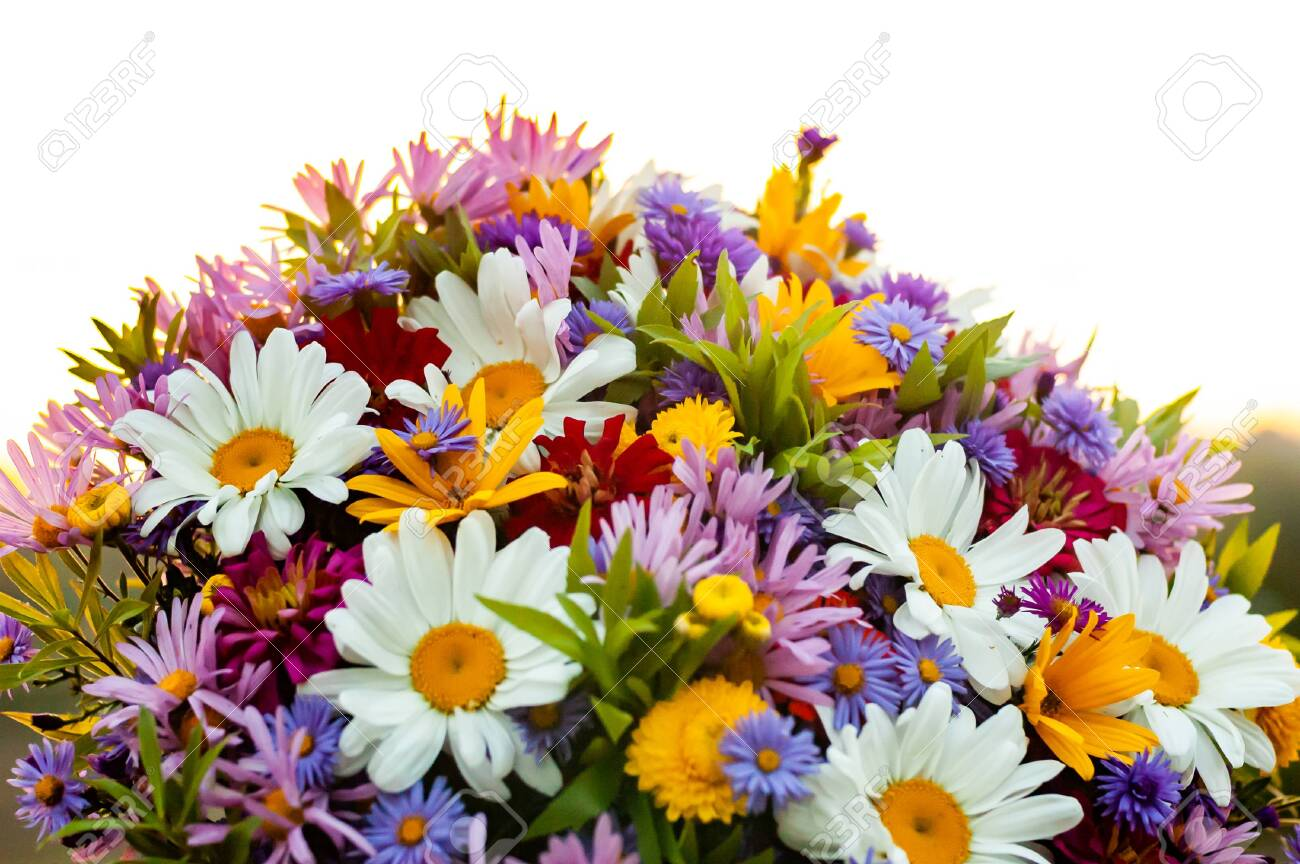 An Abundance Of Diverse Beautiful Blooming Flowers In One Summer