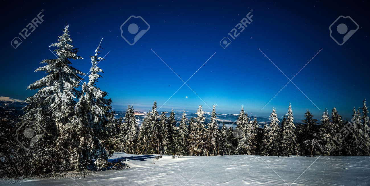 Mystical magical night landscape of snowy fir trees growing among the snowdrifts on the hills on a clear frosty winter starry night. Concept of environmentally friendly nature - 135118002