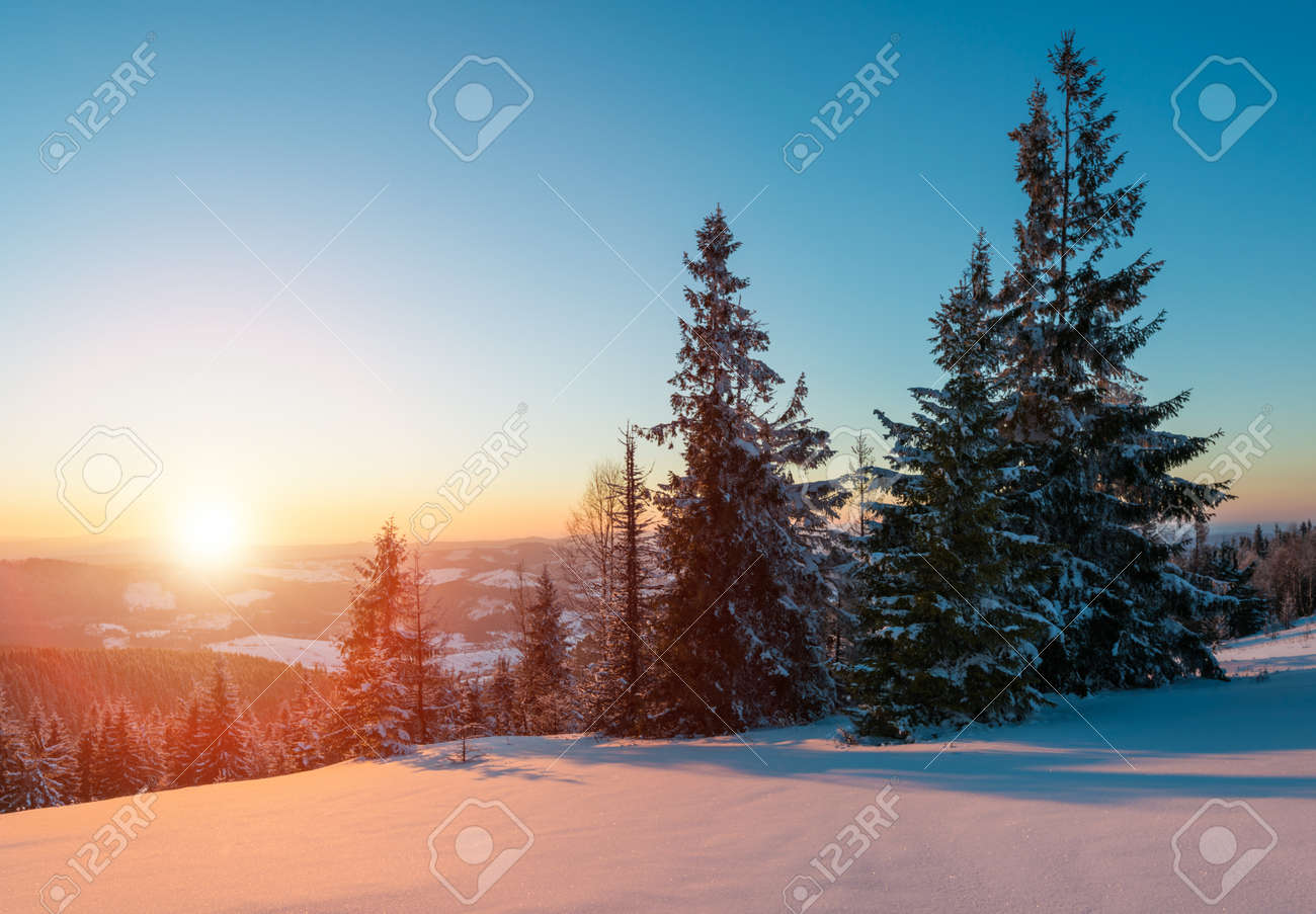 Mesmerizing landscape of dense coniferous forest growing on snowy hills against a background of blue sky and white clouds on a sunny frosty winter day. Concept of ski resort and trekking - 135348510