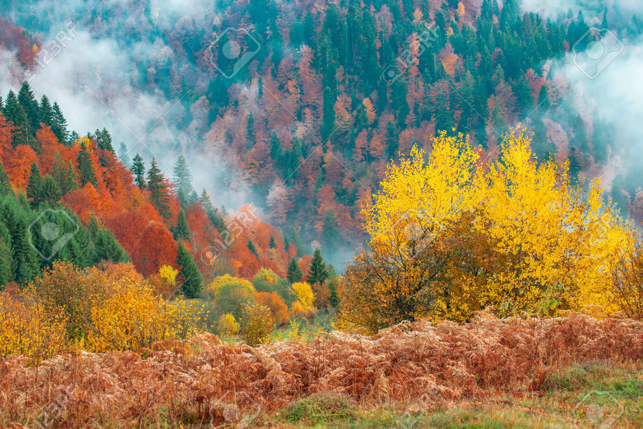 View of majestic mountain forest. Gorgeous foggy hill with colorful coniferous trees. Concept of nature. - 151262704