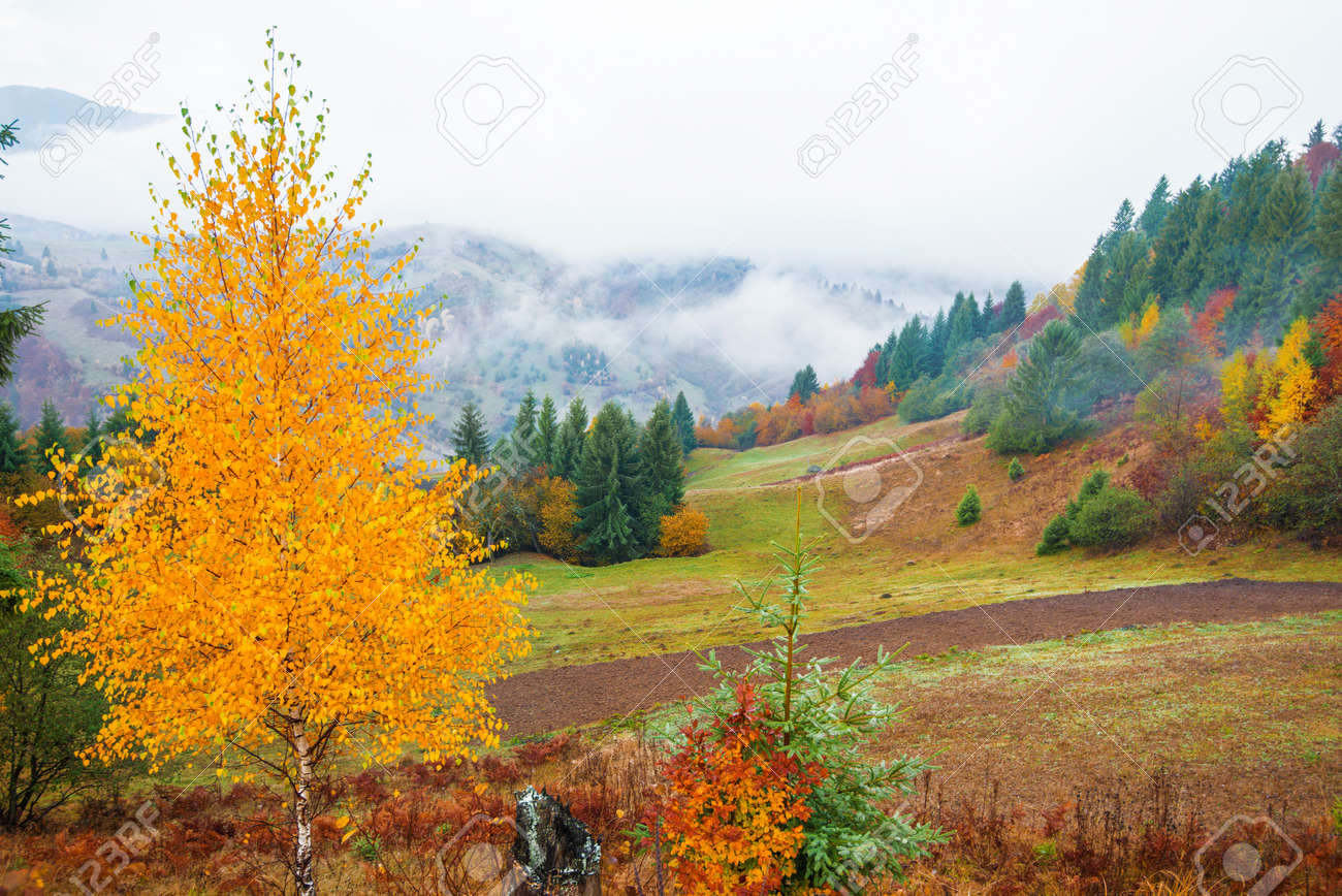 View of majestic mountain forest. Gorgeous foggy hill with colorful coniferous trees. Concept of nature. - 151262472