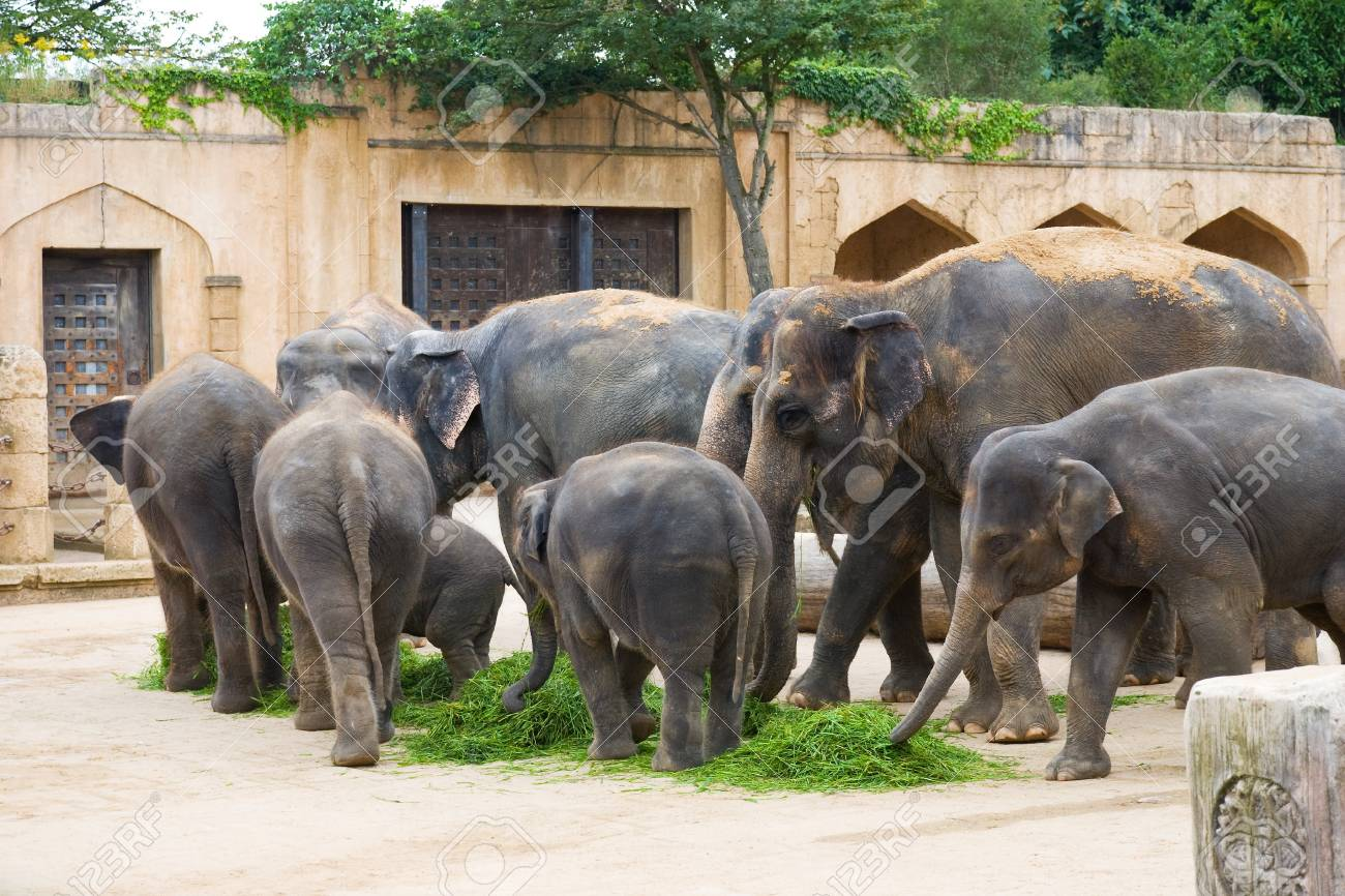 Elephants eat grass on a foreground of ancient wall Stock Photo - 4426025
