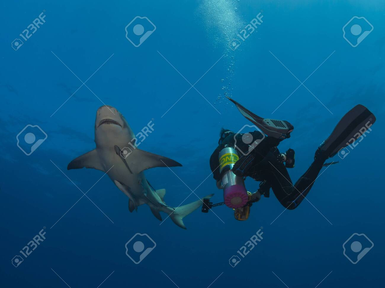 Danderous shark swim throw the crystal clear water with sun on background and moving around diver - 140952842
