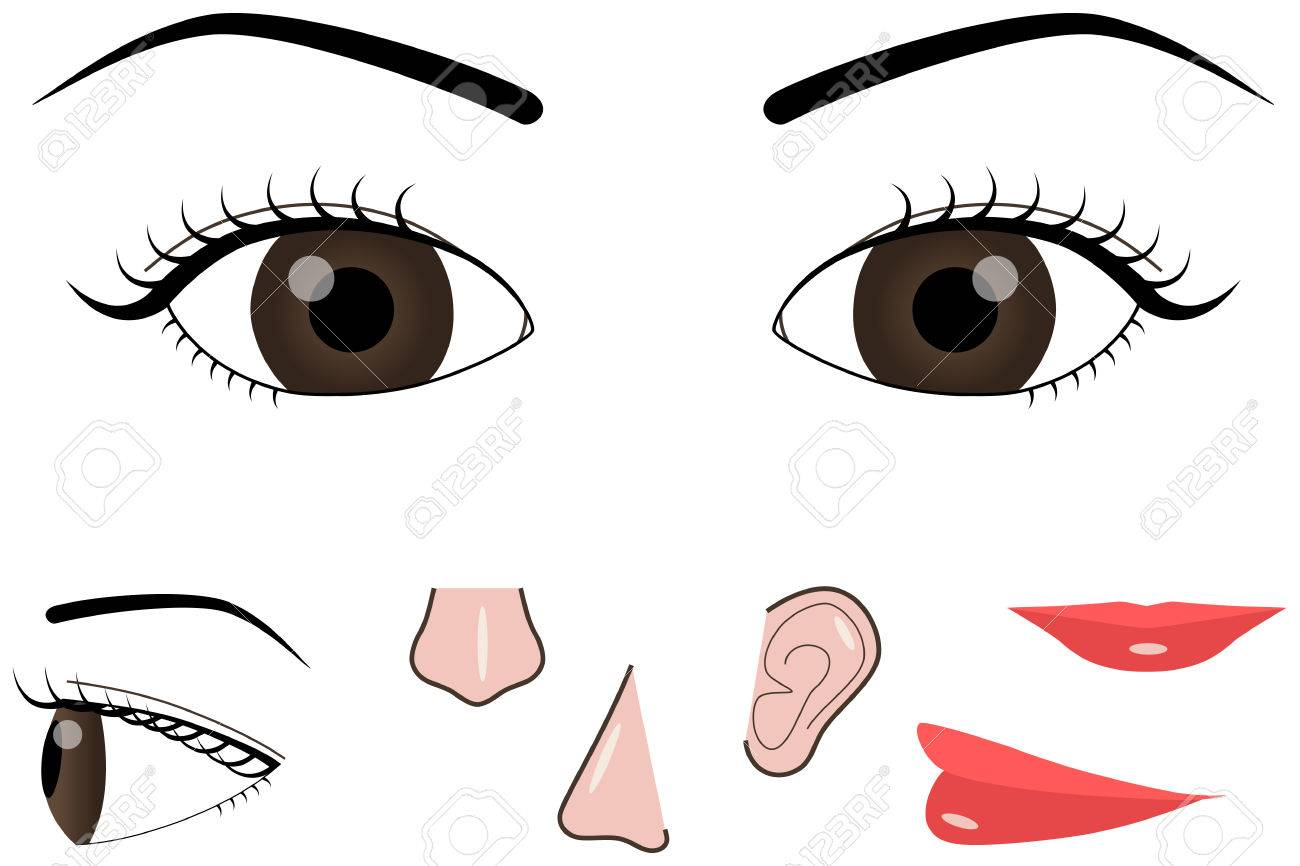 face parts royalty free cliparts vectors and stock illustration rh 123rf com face parts clipart black and white