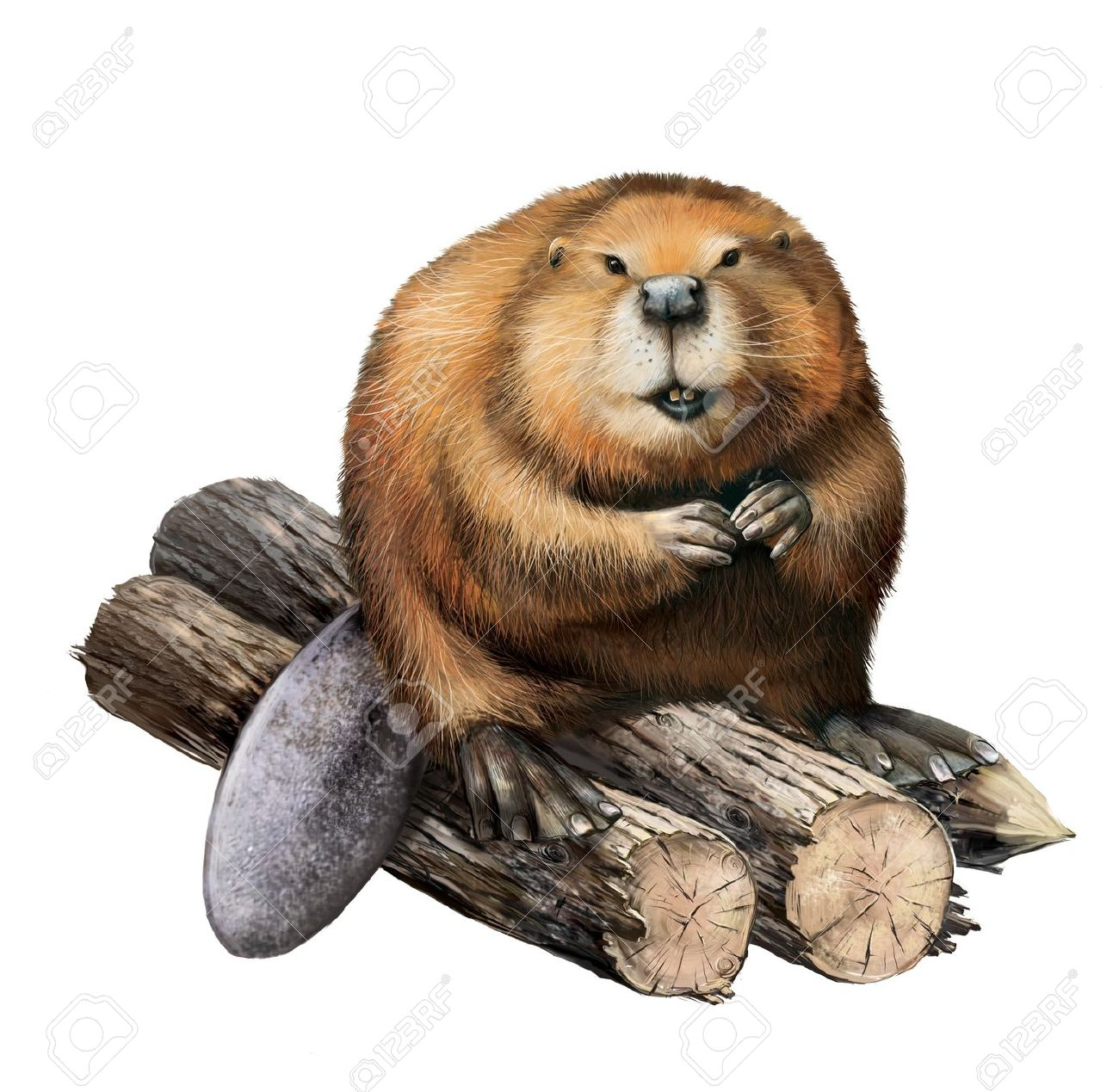 beaverbeliever Avatar