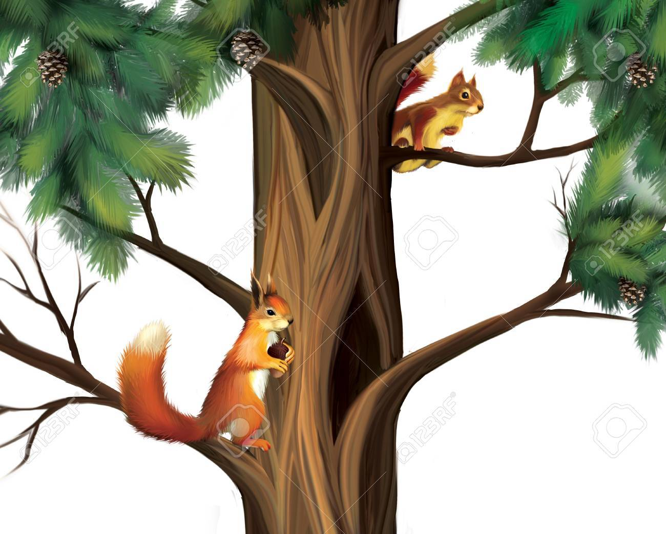 Squirrels on the tree  Two Cute Squirrels Stock Photo - 18379229