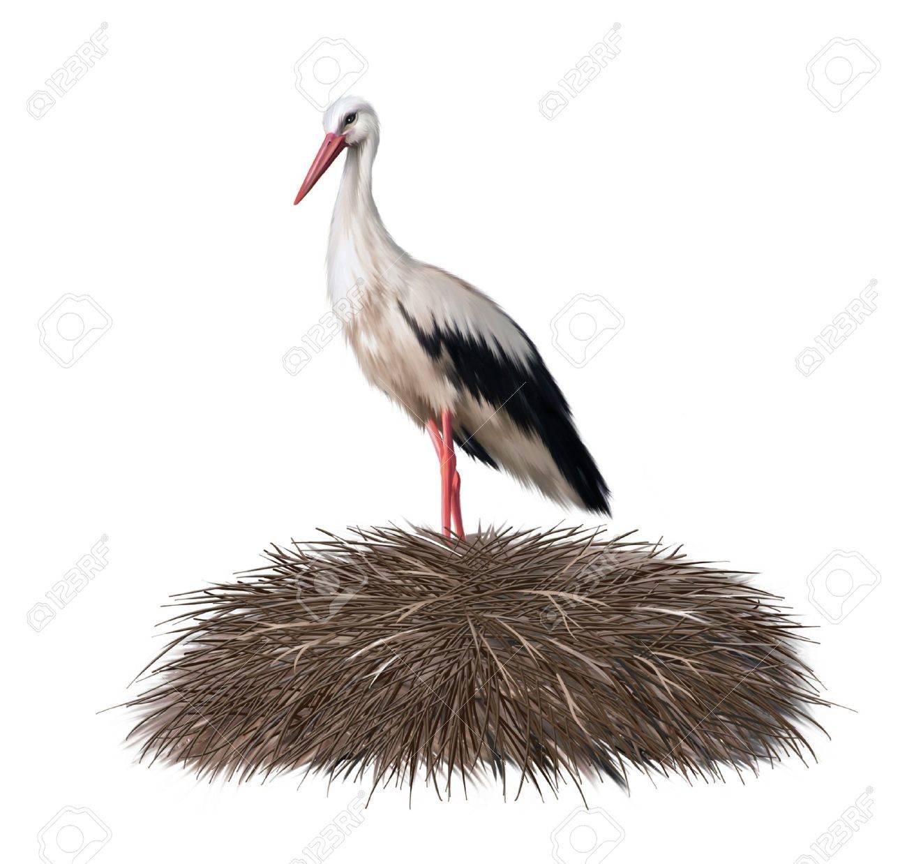 Adult stork standing in its nest  Spring Standard-Bild - 18411616