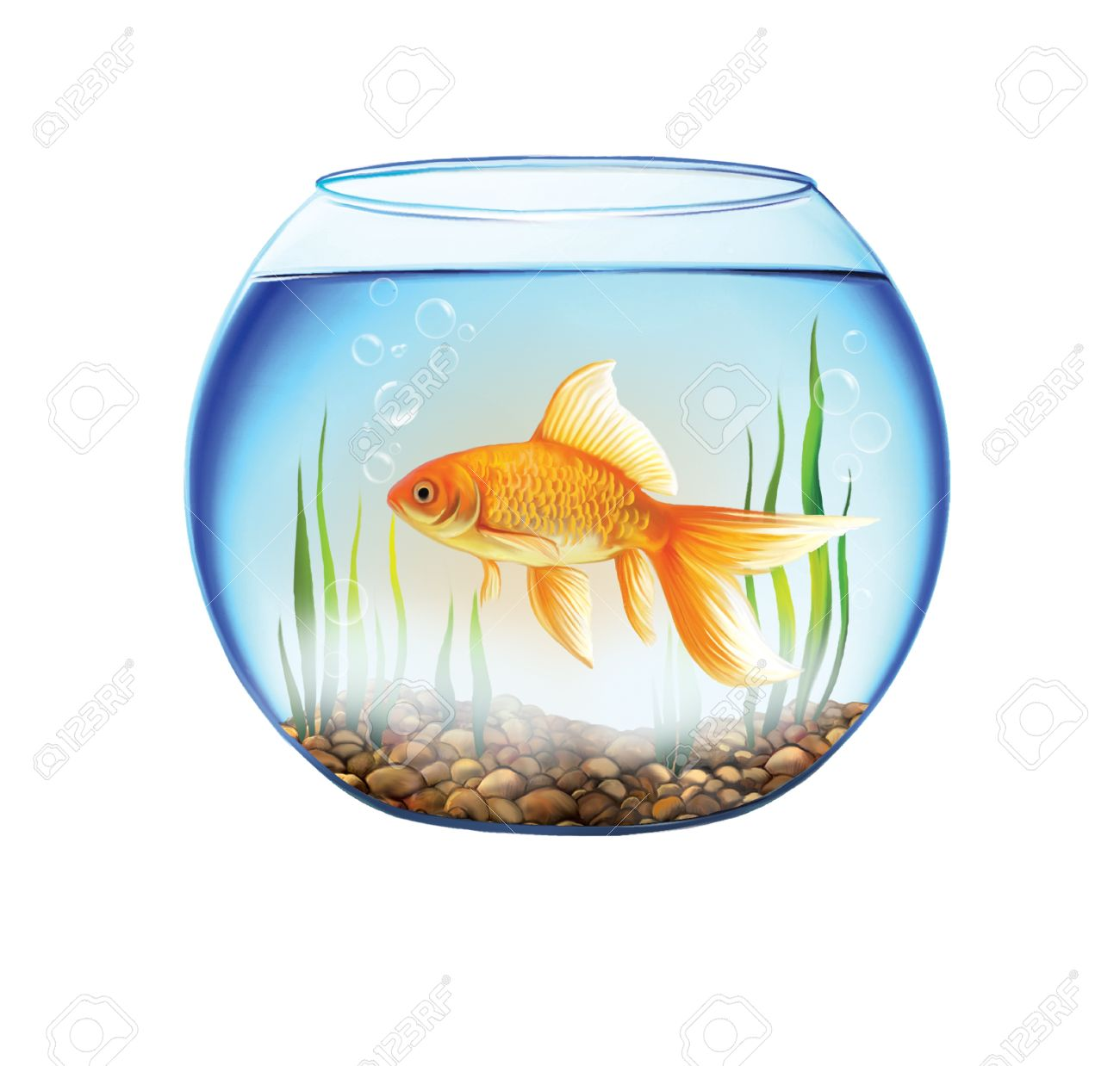 Freshwater fish bowl - Gold Fish Bowl Gold Fish In A Round Aquarium With Stones And Plants Close Up