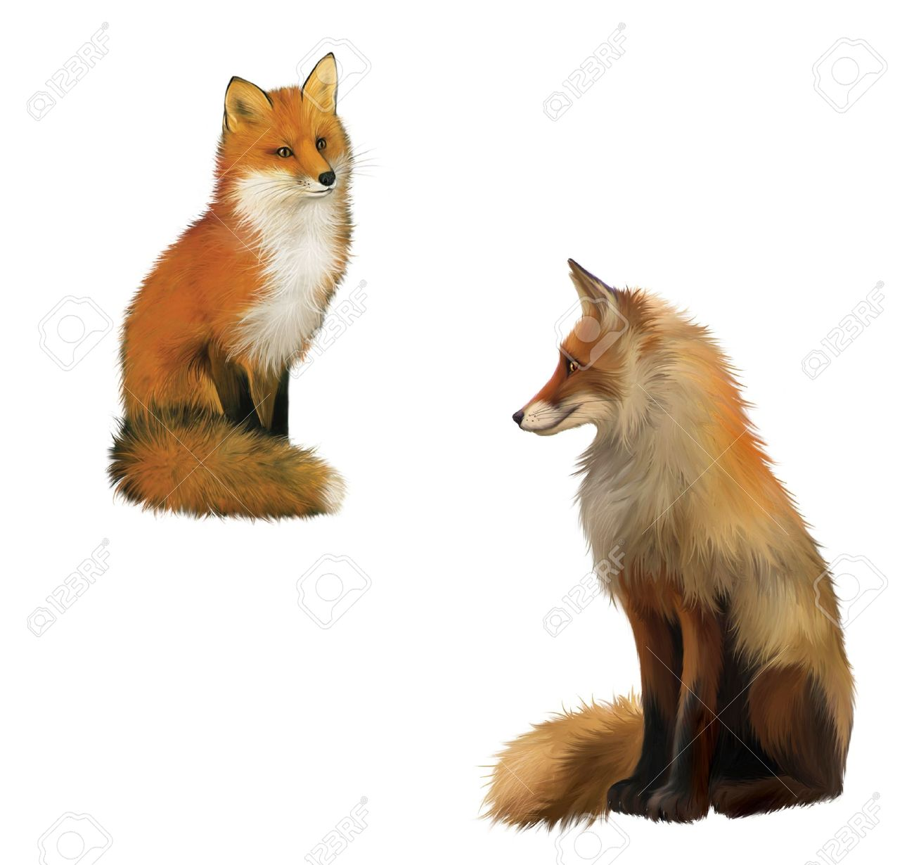 reynard the fox stock photos royalty free reynard the fox images