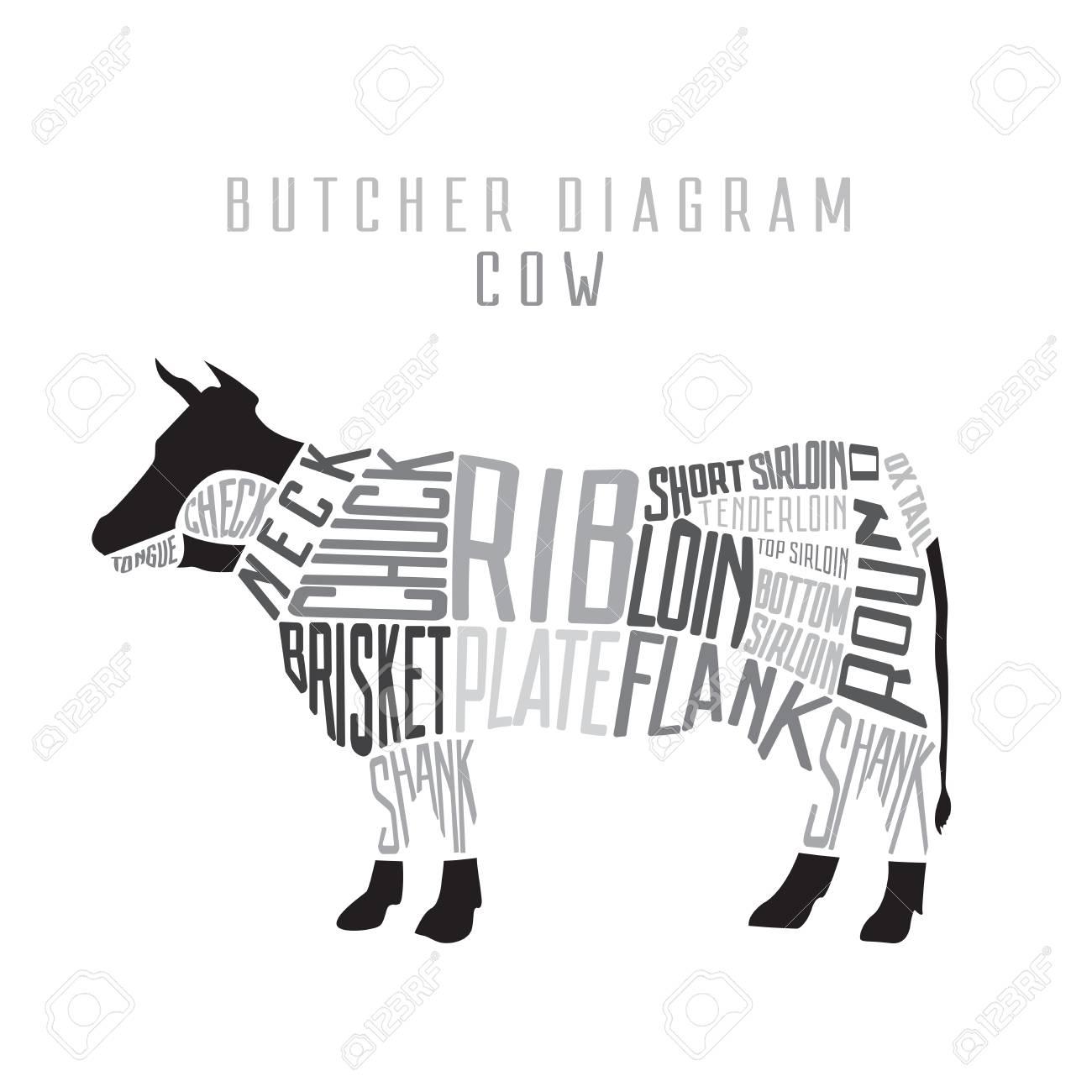 Cow butcher diagram cut of beef set typographic vintage vector cow butcher diagram cut of beef set typographic vintage vector illustration stock vector ccuart Gallery
