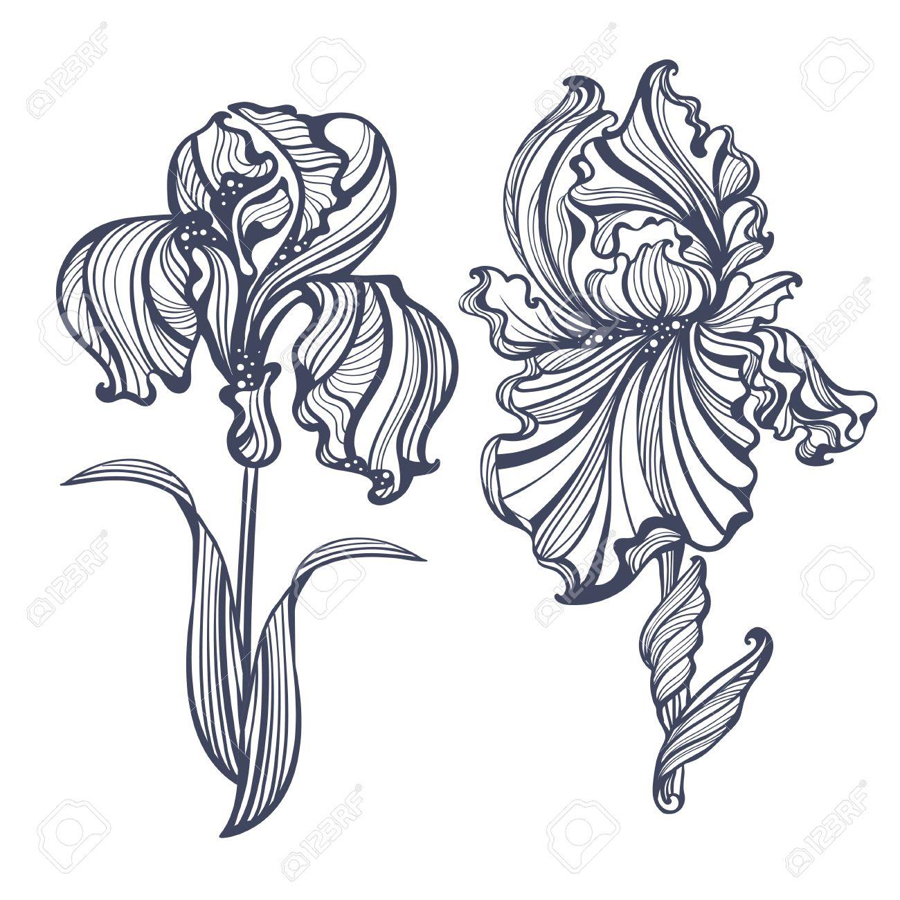 Iris Tatouage gracieux iris isolé dans un style vintage art nouveau. il peut être
