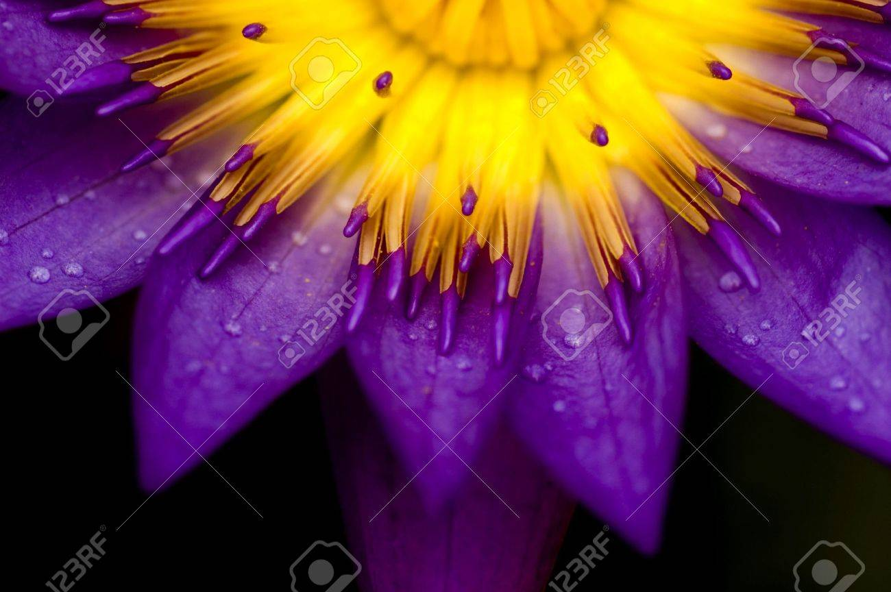 lotus Stock Photo - 2796132