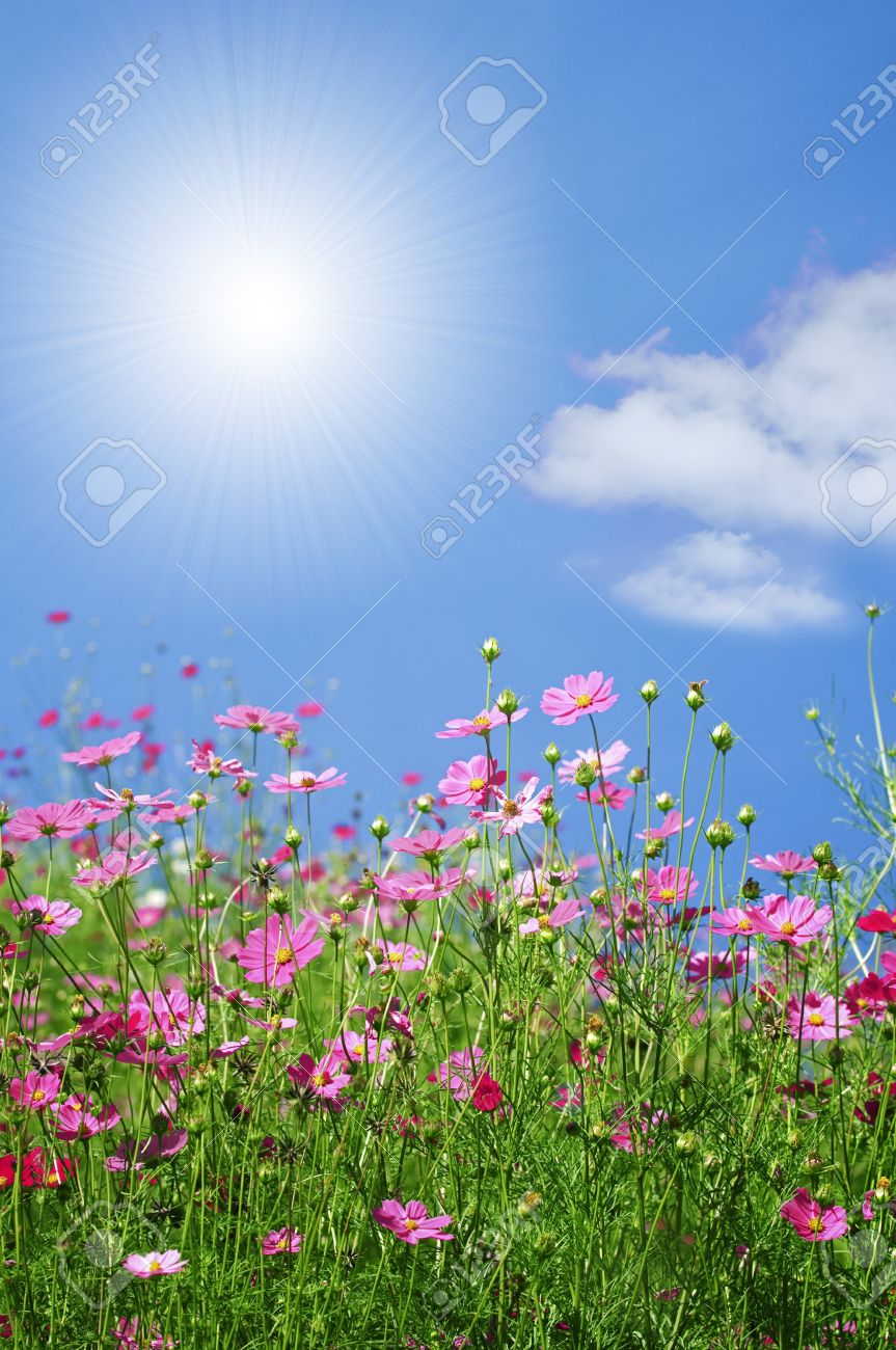 Wonderful Summer And Spring Flowers With Blue Sky And Sun Stock