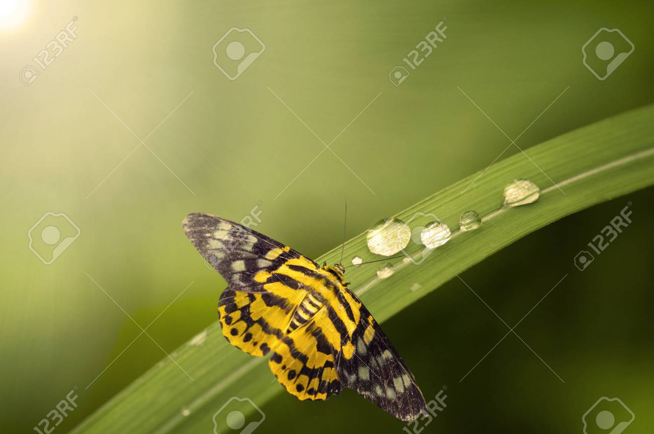 close up of butterly with lights Stock Photo - 9626652
