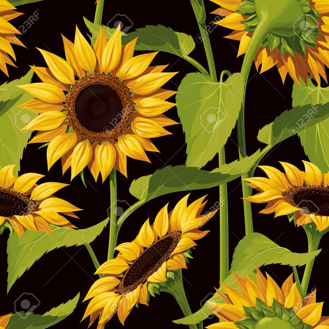 133733715 seamless vector pattern of realistic sunflower flowers on a black background with stems and leaves