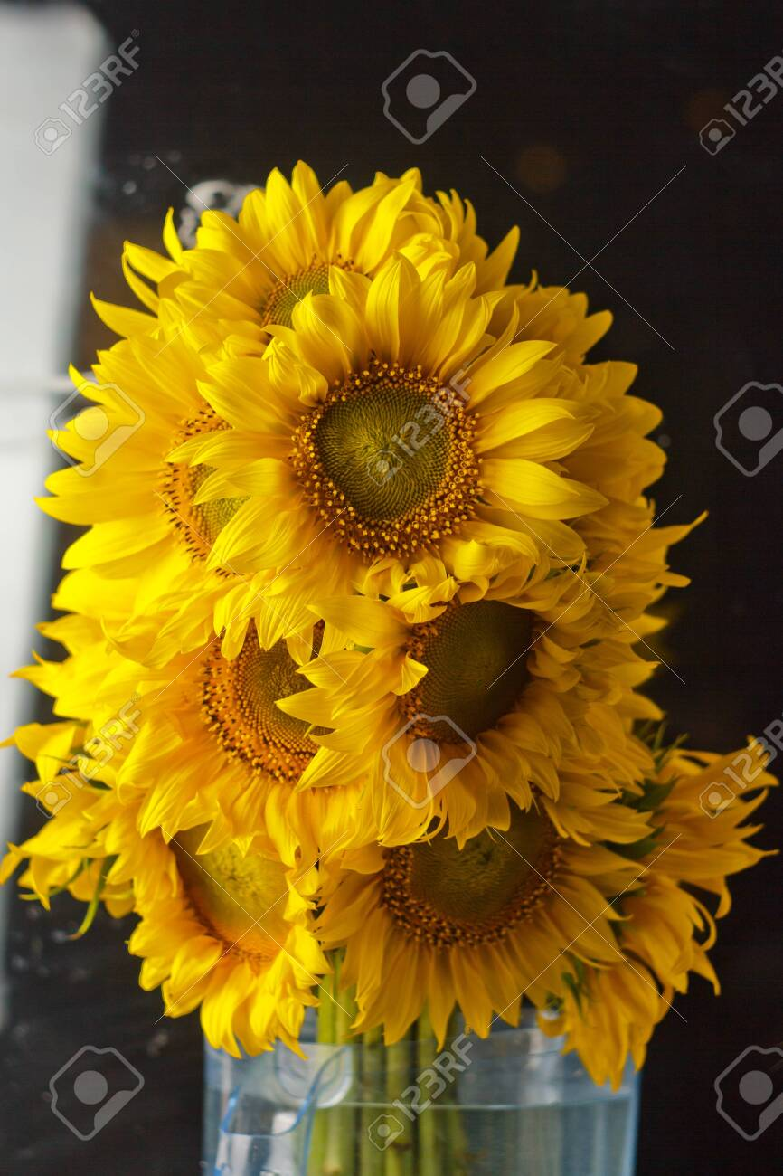 Beautiful Bouquet Of Warm Pollen Yellow Flowers Of An Unripe Stock Photo Picture And Royalty Free Image Image 120942647