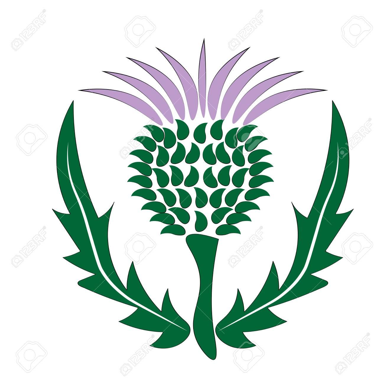 thistle Scotland symbol and emblem - 131837741