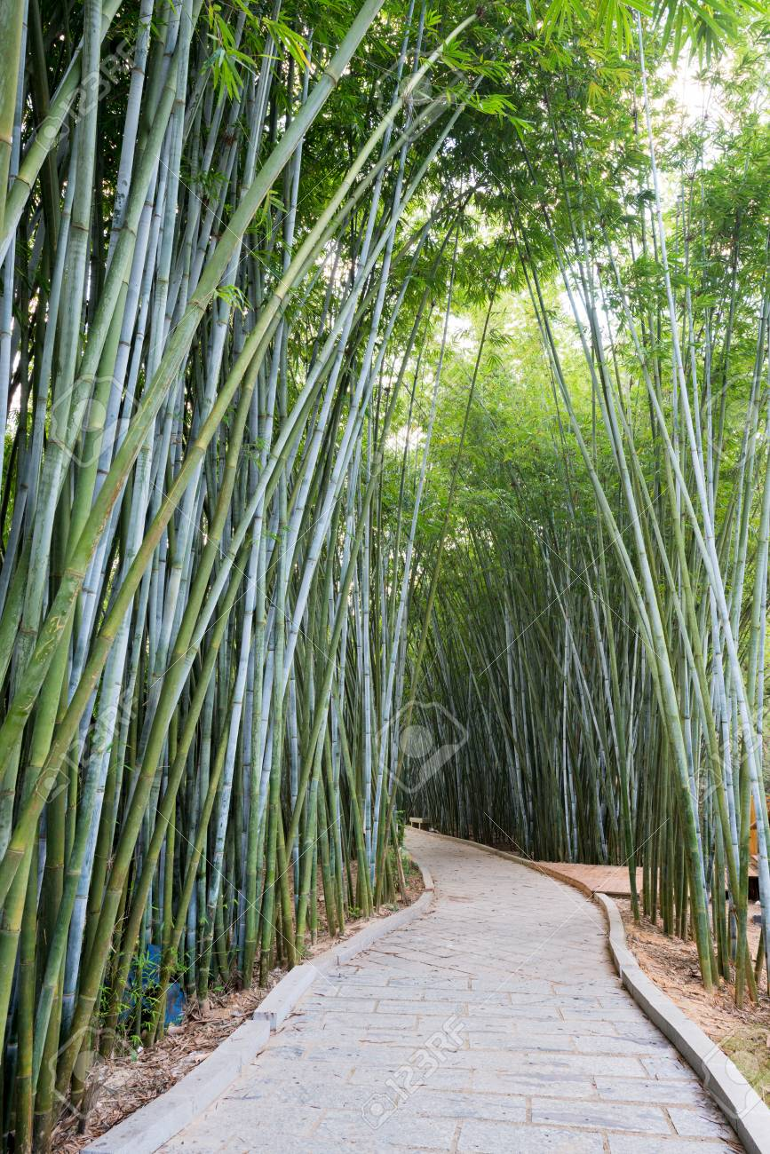 Bamboo Plants In Asia Stock Photo Picture And Royalty Free Image