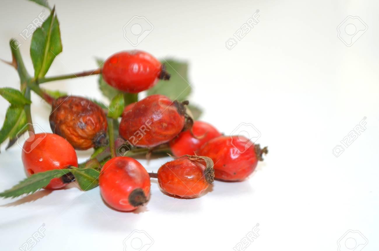 La Rose Musquee Est Une Plante Medicinale Banque D Images Et Photos