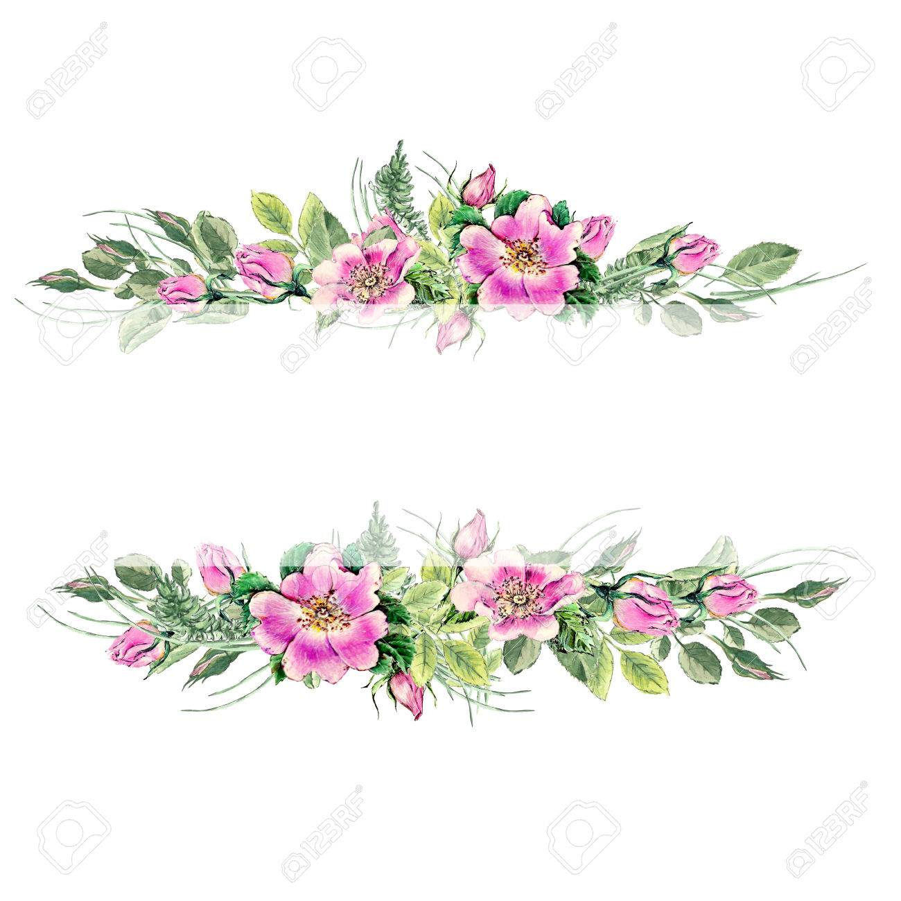 Banner with flowering pink roses names: dog rose, rosa canina,