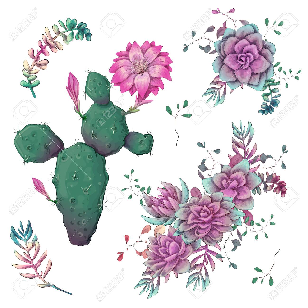 Succulents. Cacti hand drawn on a white background. Flowers in the desert. Vector drawing succulents. - 124502818