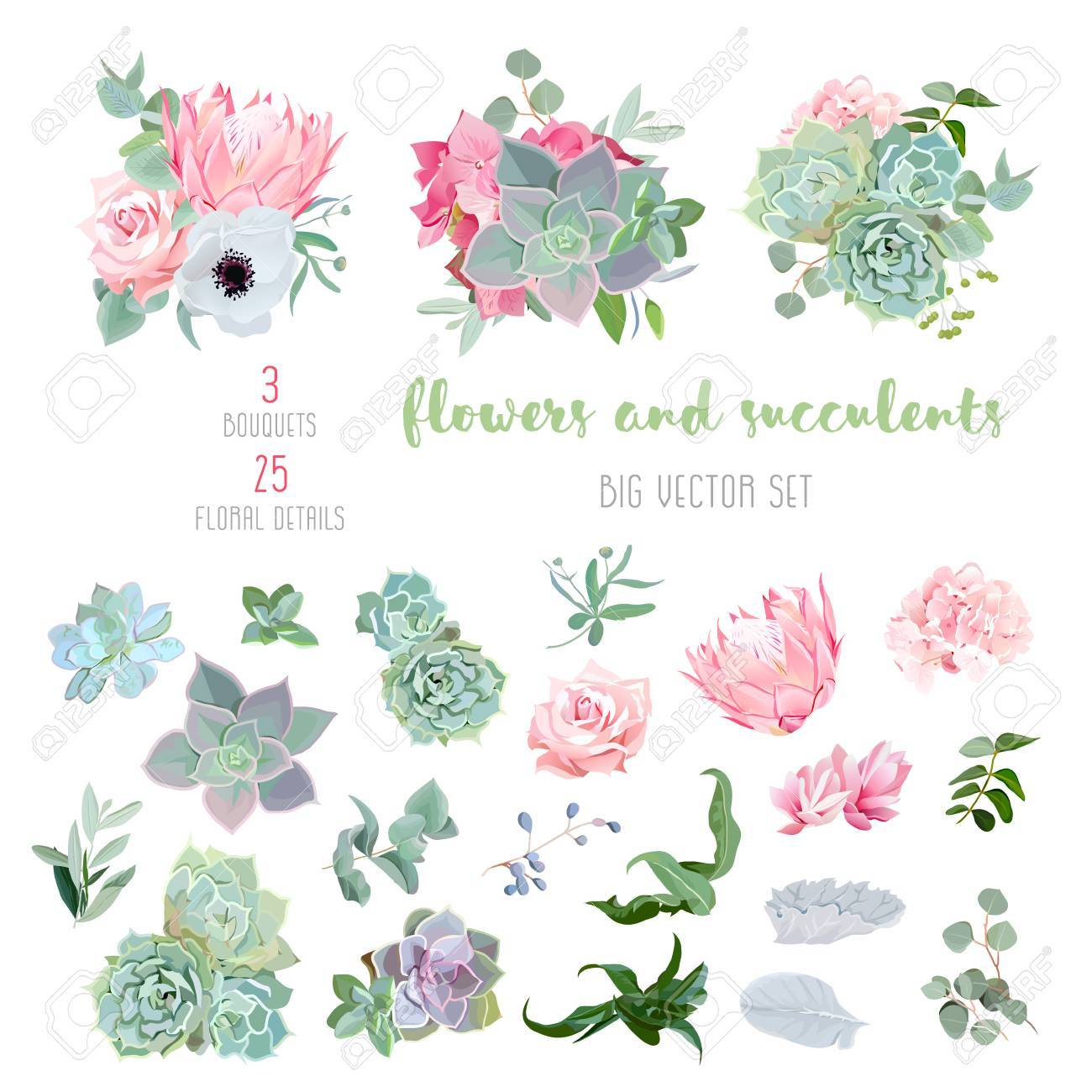 Succulents, protea, rose, anemone, echeveria, hydrangea, decorative plants big vector collection. All elements are isolated and editable. - 66855088