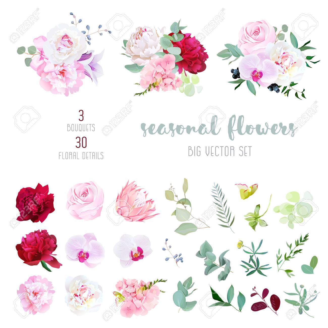 Pink rose, white and burgundy red peony, protea, violet orchid, hydrangea, campanula flowers and mix of seasonal plants and herbs big vector collection. All elements are isolated and editable. - 69595444