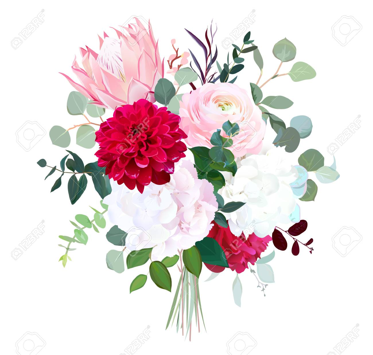 Pink Protea Ranunculus Burgundy Red Dahlia Peony White Hydrangea Royalty Free Cliparts Vectors And Stock Illustration Image 105588894