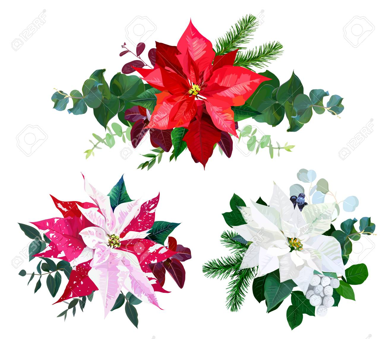 Christmas Bouquets Arranged From Red And White Poinsettia Fir