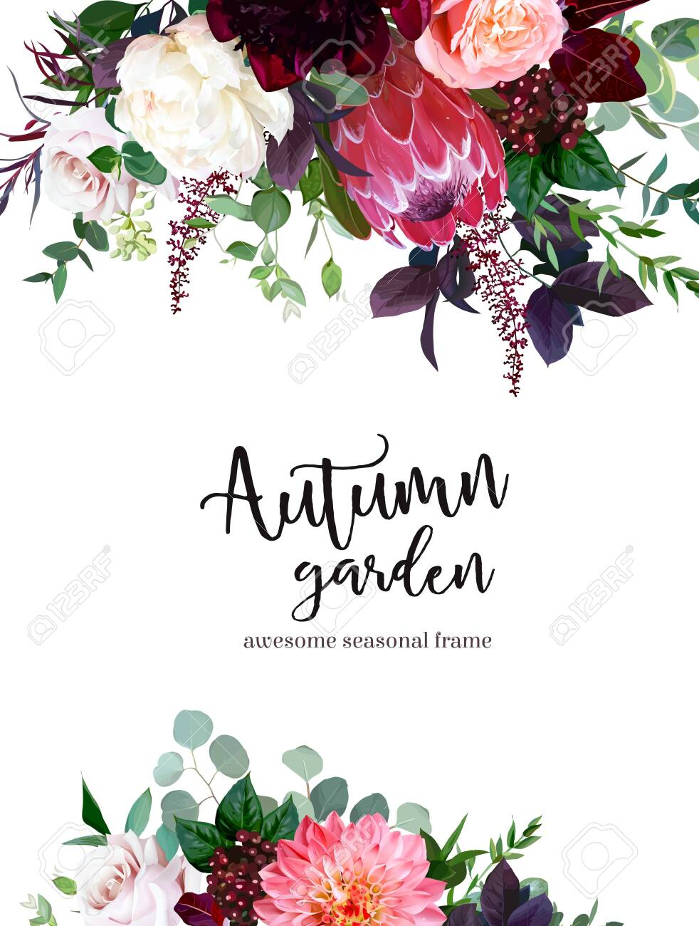 Luxury fall flowers vector design frame. Protea flower, peachy coral garden rose, burgundy red peony, ranunculus, astilbe, greenery and berry. Autumn wedding bunch of flowers. Isolated and editable - 135074641