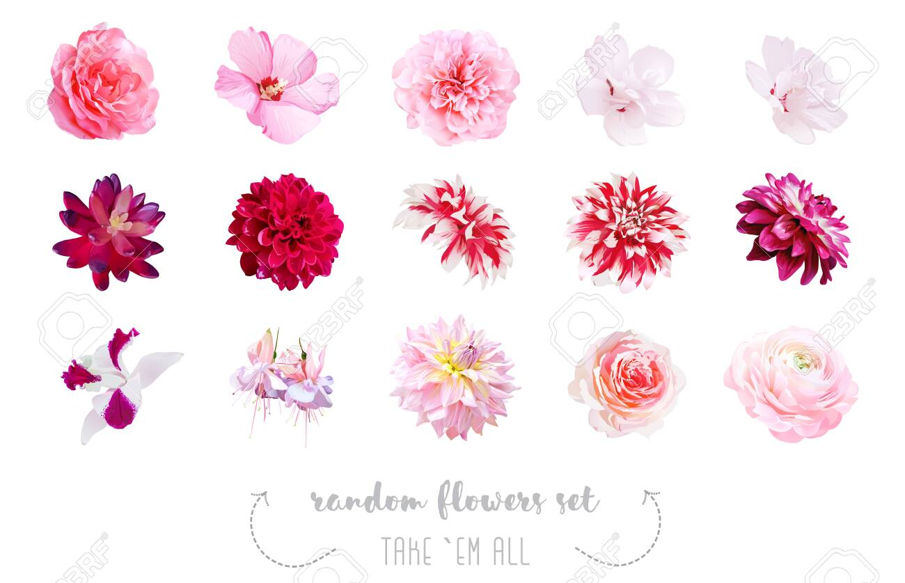 Watercolor Style Various Flowers Set Coral Pink Fuchsia Red Royalty Free Cliparts Vectors And Stock Illustration Image 143299813