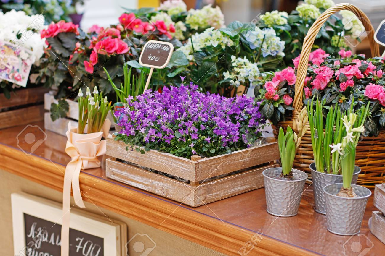 Different beautiful flowers in wooden boxes and flower pots at market Stock Photo - 100370375 & Different Beautiful Flowers In Wooden Boxes And Flower Pots At ...