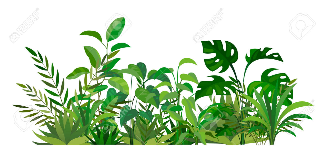 Herbal green decor. Beauty nature ferns and herbs. Tropical greenery with leaves and stems. Summer forest meadow plants. Natural botanical decoration. Vector wild field illustration - 171599913