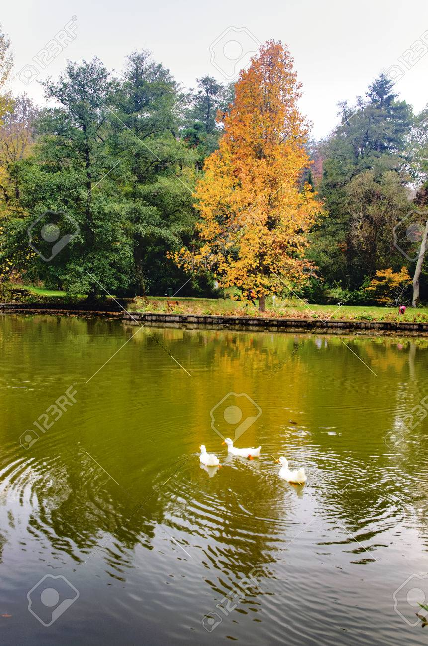Autumn trees around lake. Fall trees reflected in lake. Autumnal scene with yellow, orange and red leaves on trees. - 70164599