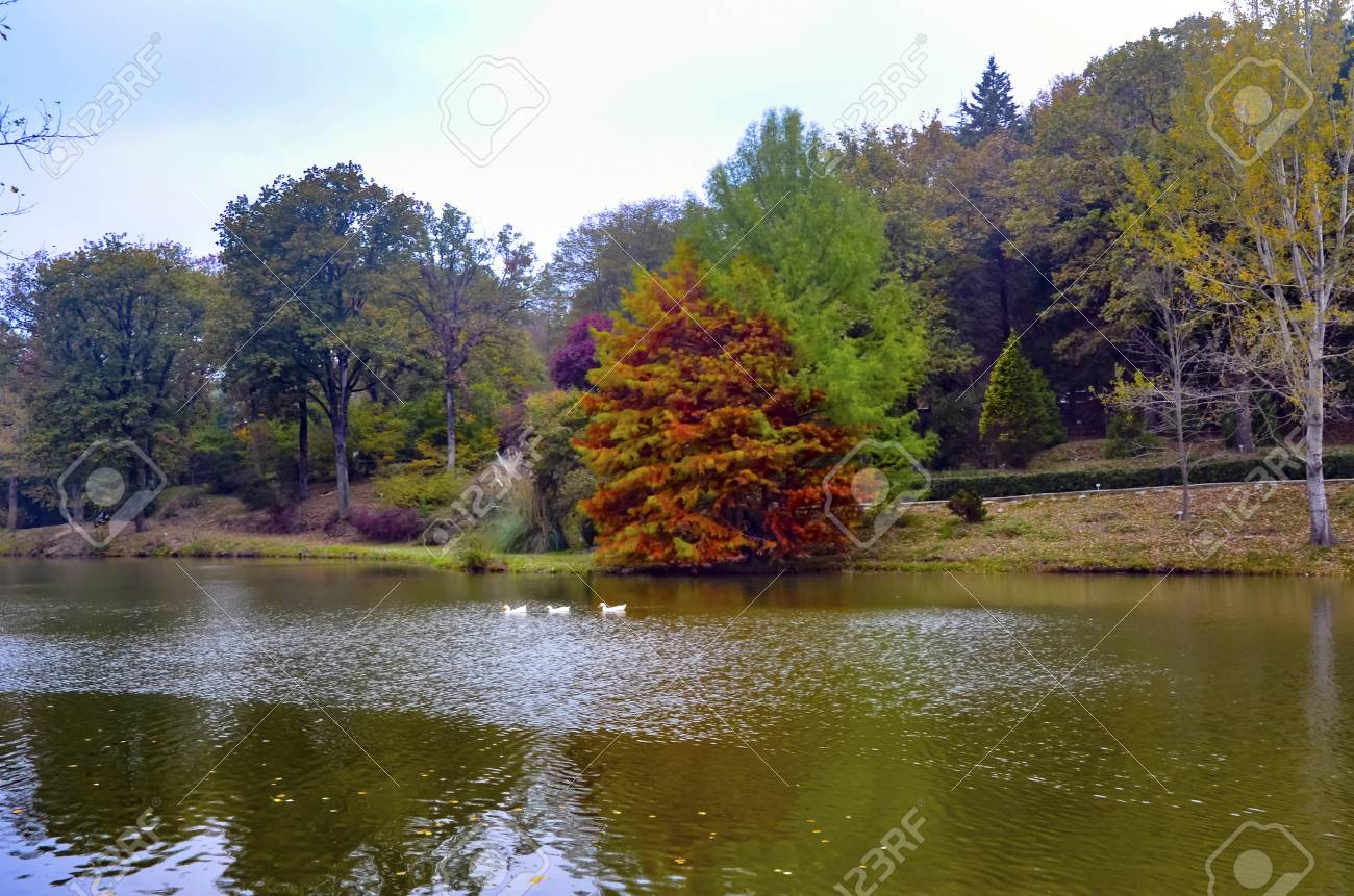 Autumn trees around lake. Fall trees reflected in lake. Autumnal scene with yellow, orange and red leaves on trees. - 70810047