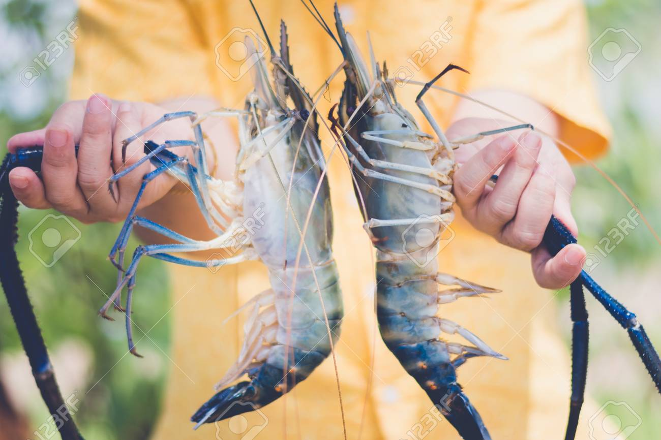 woman holding and serve with fresh water shrimp