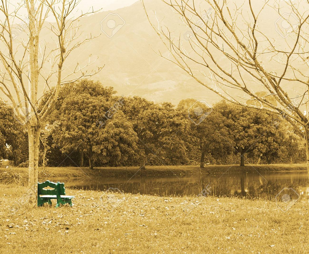sepia image of a landscape with green bench Stock Photo - 5879224