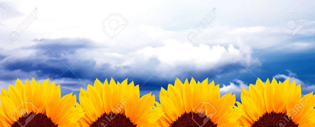 Four sunflowers over blue sky background. Nature image Stock Photo - 5955225